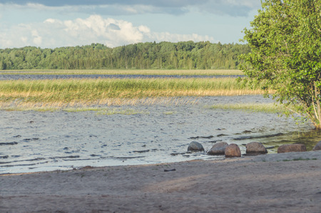 sandy beach on the lake, which is overgrown with reeds Stock Photo - 104124395