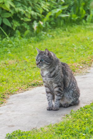 outside, a blind cat, alone and abandoned Stock Photo