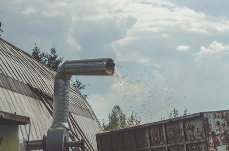sawdust flying out the vent tube into the container for collecting garbage, factory, mill collects waste for recyclable materials for processing