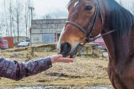 a girl hand-feeding a horse bread