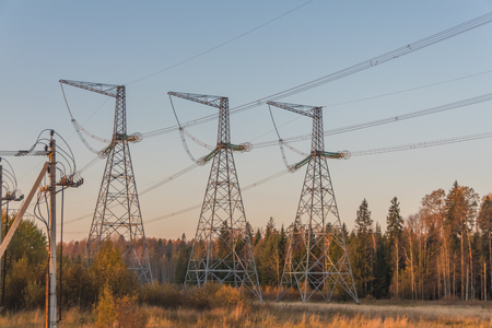 the high-voltage power lines in the forest among the trees