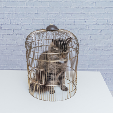 the cat closed in a cage on a table against a white brick wall Banco de Imagens