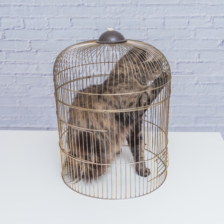 the cat closed in a cage on a table against a white brick wall Stock Photo