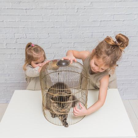 niña, un niño libera al gato de la jaula, frente a una pared de ladrillo blanco