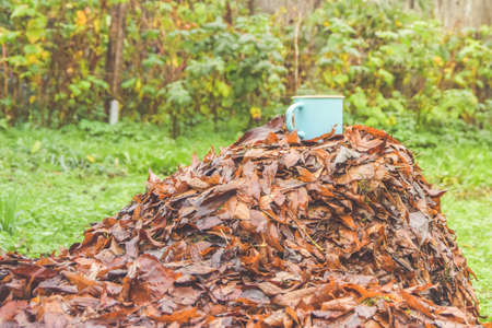 the mug with hot drink on fallen leaves in the rain Imagens