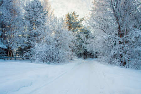 Winter road in the fairy-tale forest photo