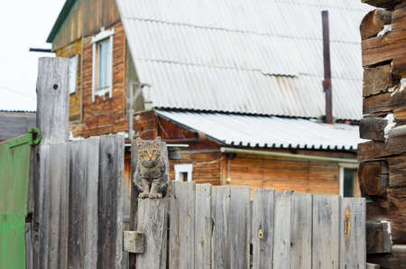 Village cat sitting on a wooden fence behind the gate and a private house in the Yakut.