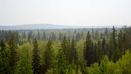 Panorama of the taiga of Northern Yakutia with spruce and mountain on the horizon.
