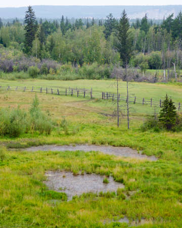 A small pond with water in the field, the road along the fence in the Yakut spruce forest North to the horizon.