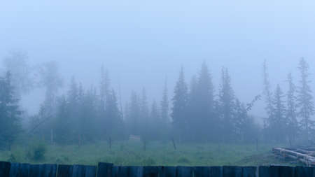 A strong white morning fog envelops the residential plot under construction with trees and the beginning of the log house in the Northern taiga of Yakutia.