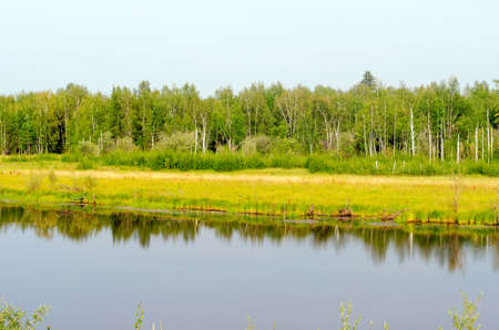 Wild Yakut lake in a field in the forest with the reflection of grass on the shore in the taiga in the North of Russia.