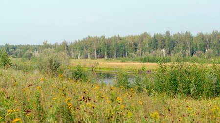 Wild field colorful flowers grow in autumn on the background of the Northern lake and birch forest in Yakutia in the afternoon. Banco de Imagens