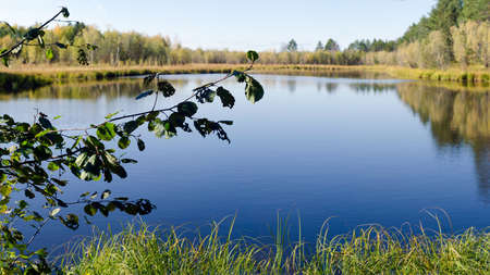 The leaves of the tree on the background of the clean surface of the water with the reflection of the Northern forest and trees in the wild secluded taiga of Northern Yakutia. Banco de Imagens