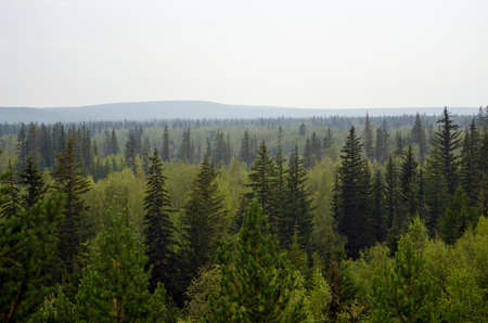 Panorama of the wild Northern Yakut spruce taiga with hills behind the gray day.
