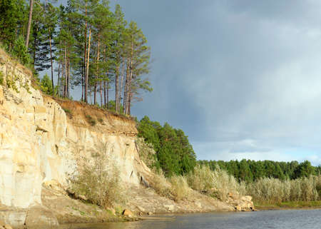 Pine Forest on a cliff near the river Bank with the erosion of clay soil and layers of land under the roots of trees in the wild tundra of Yakutia at sunset in the evening.