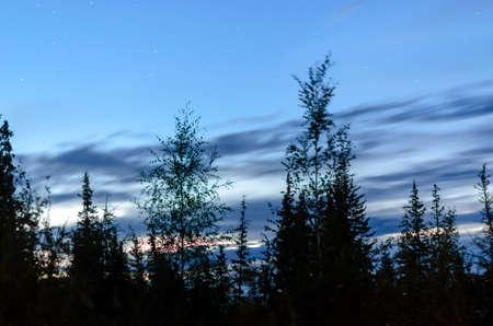 Dark night sky over the trees fir trees in the taiga of Yakutia.