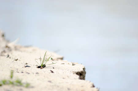 A small lone tuft of green grass grows on the sandy Bank of the river, crumbling with water.