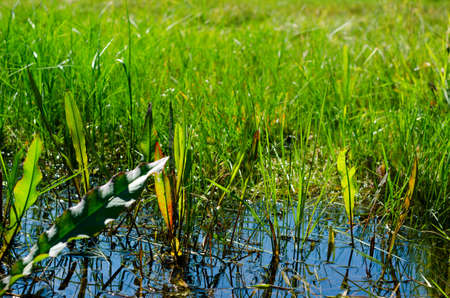 A puddle of blue water and the reflection of the surrounding green grass in the field on a summer day.