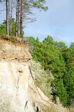 The edge of a clay cliff near the pine taiga forest of Yakutia with layers of earth and stone against the sky . Imagens