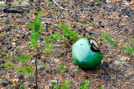 Abandoned green protective helmet of a motorcyclist lying on the spruce needles and cones in the forest.
