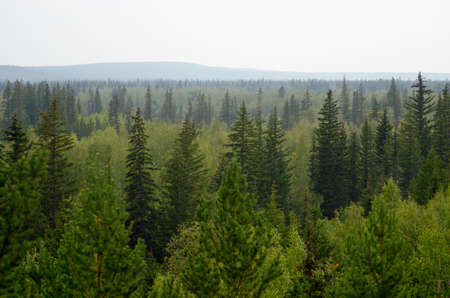 Panorama of the taiga of Northern Yakutia with fir trees and hills on the horizon in the afternoon. Imagens
