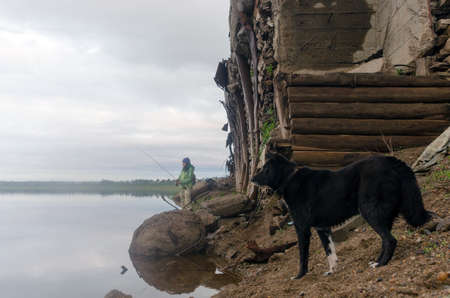 Black faithful dog with a collar watching the bait that throws spinning girl fisherman at the old pier in the wild North of Yakutia and the forest early in the morning.