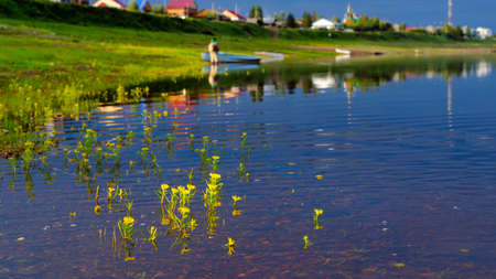 Yellow flowers filled overflowing of the Northern river basin in Yakutia in the water on the background of the houses of the village of North and silhouette of a fisherman striking in the evening.