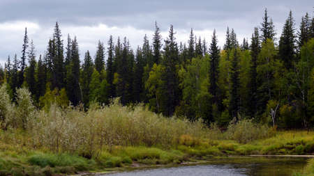 A bright evening in the Yakut tundra near a small river Kempendyay in spruce taiga in the North.