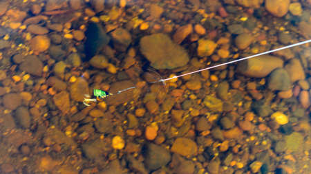 Fishing lure with spinning points spinning the spoon in clear water on the fishing line amid rock bottom. 写真素材 - 132248079