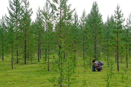 Asian tourist girl with a package in her hands and a backpack collects mushrooms in the forest with small targets and green grass in the wild taiga of the North of Yakutia in the afternoon.