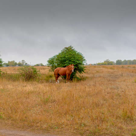 A lone horse stands by a small tree Bush in foggy rainy weather in a field in the village.