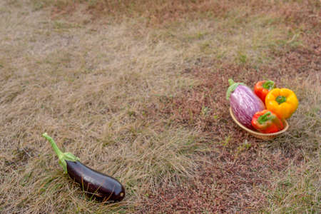 Still life of fresh vegetables after harvest on autumn grass with black eggplant and a bright basket of peppers.