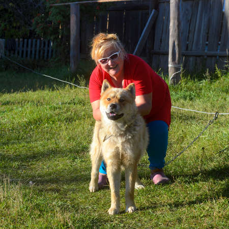 Joyful Yakut fat woman in glasses playing with his dog breed Akita inu on the green grass of the village site in Yakutia. Stock Photo