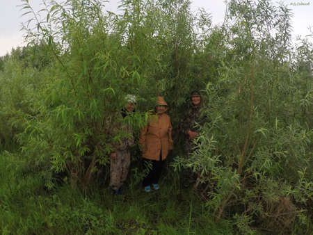 Three smiling Yakut Asians hide in bushes with leaves from the rain in the wild North of Yakutia. 写真素材