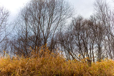 The bare branches of willow trees overhang the yellow grass in autumn.