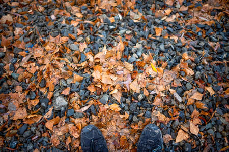 Black sneakers on the feet of a tourist stand on white snow fell on rubble stones with yellow autumn leaves. Natural background. 写真素材