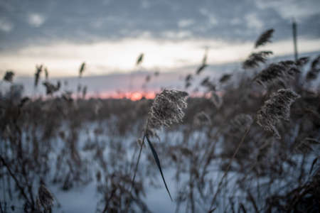 The dry grass in the winter field bent in the wind against the setting sun on the horizon in the evening. 写真素材