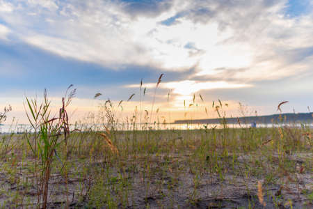 Bright sunset on the sea on the background of grass growing on the beach of sand in summer. 写真素材