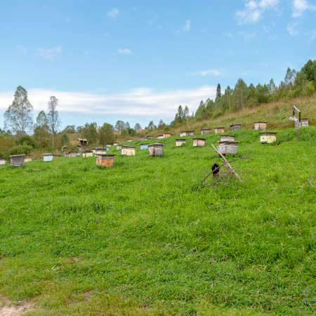 Many hives for bees stand on a green hillside in the Altai. Stock fotó