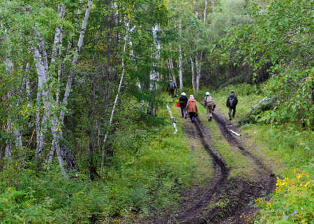 A group of collectors of men and women of Asian Yakuts with bags and buckets are on the road to the Northern forest among the birches.