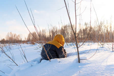 A man with a hood on his back climbs half in a snowdrift in a field among bushes in winter.