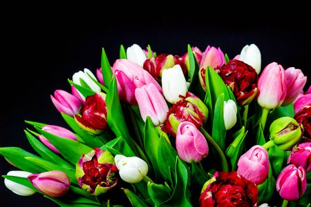 bright bouquet of tulips on a dark background Foto de archivo - 133695361