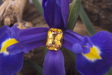 Big emerald cut yellow sapphire on flower. Stock Photo