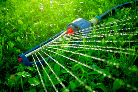 spaying: Lawn sprinkler spaying water over green grass. Irrigation system