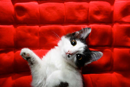 Kitten on a red background Imagens