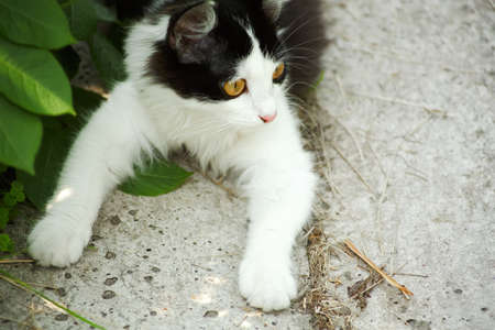 Black and white small kitten in green garden Stock Photo