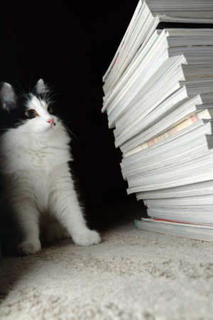 Kitten looks at a stack of magazines Stock Photo