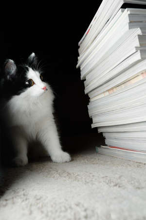 Kitten looks at a stack of magazines. Selective focus
