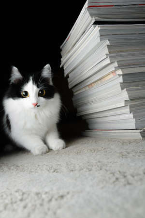 Kitten and a stack of magazines. Selective focus