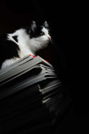 Kitten on a stack of magazines